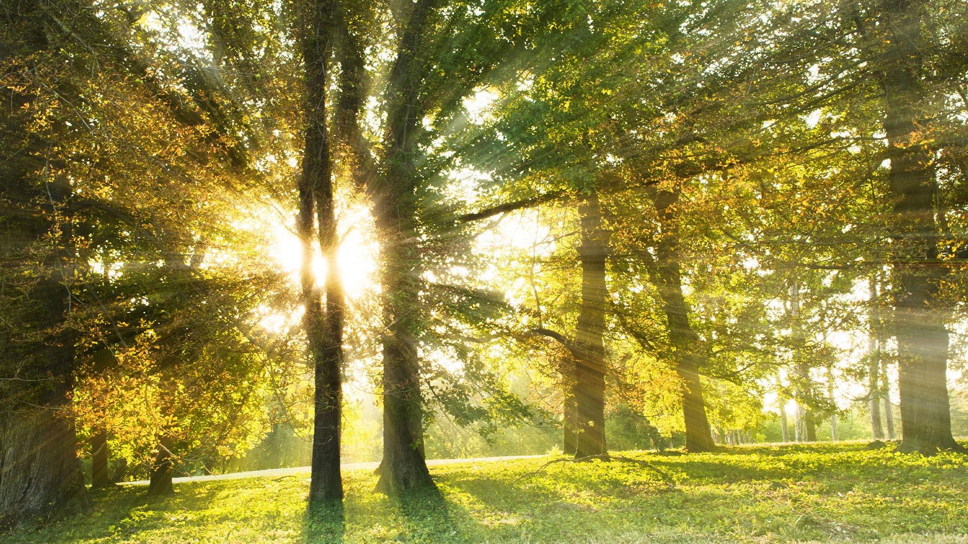Grünflächen fördern unsere Gesundheit